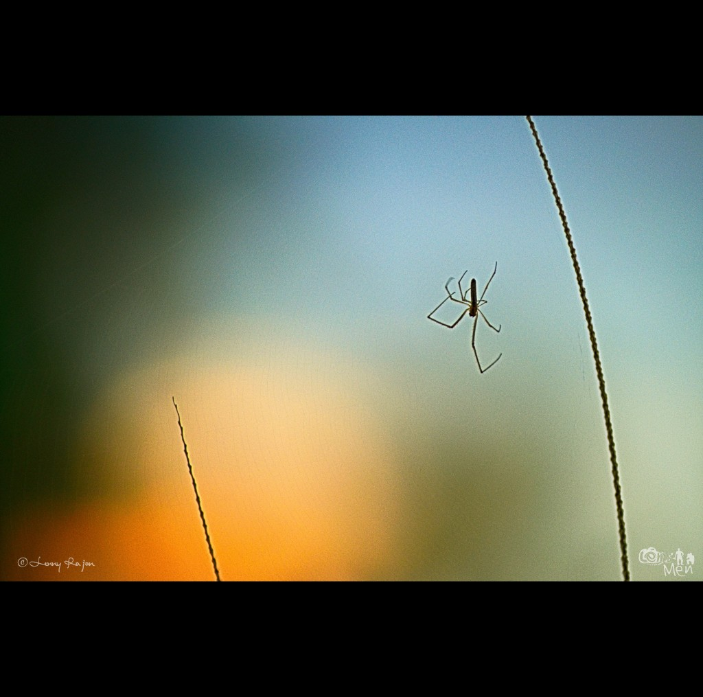 A spider, after weaving his net just before sunset.